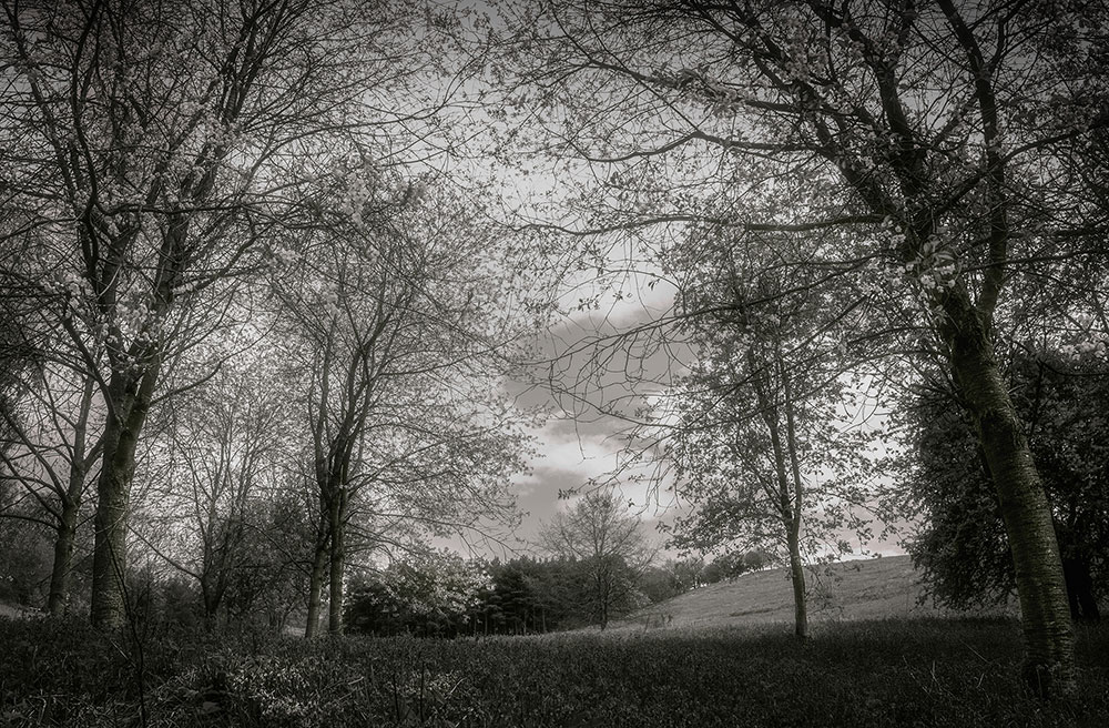 The valley in Black and White, located within the Clent Hills Worcestershire..