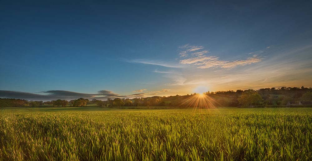 Sunset and dreamy wheat fields Enville.