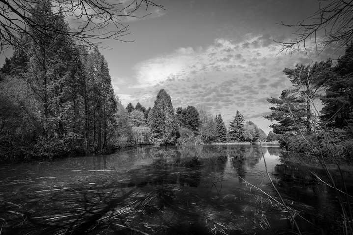 Bodenham Arboretum in Black and White.