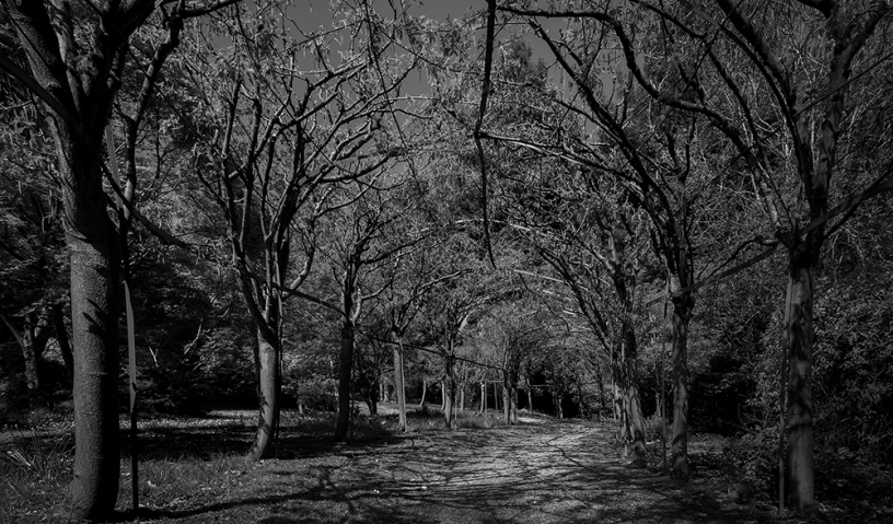 Bodenham Arboretum in Black and White II.
