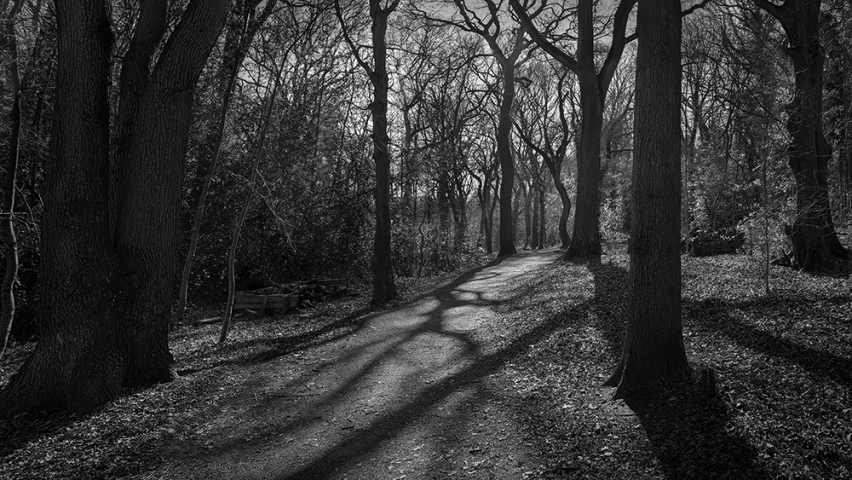 Saltwells Local Nature Reserve in  Black and White II.