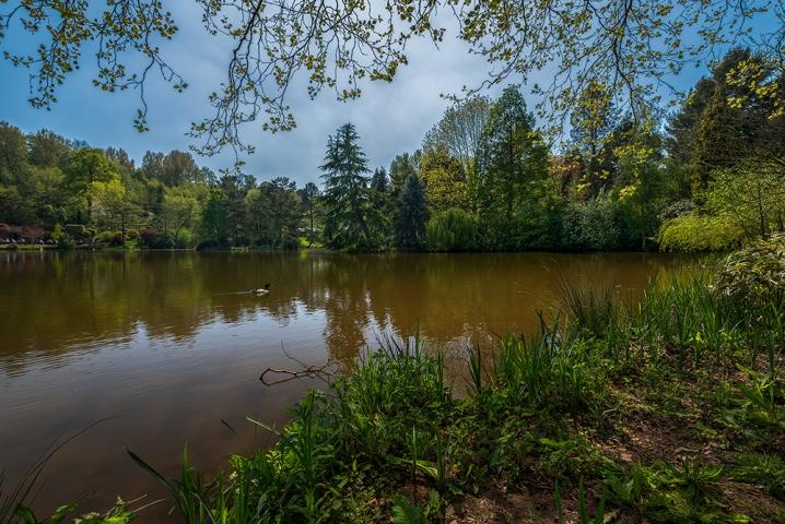 Bodenham Arboretum IV.