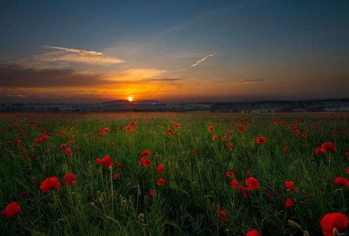Poppy Field Kingswinford.