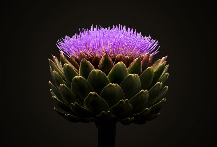 The Globe Artichoke.